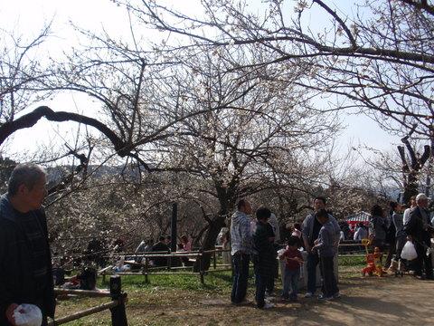 吉野梅園梅祭